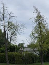 Sherman Oaks April. 7